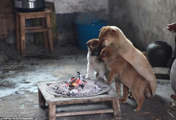 puppies-around-fire (1)