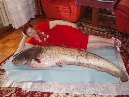 i fish dating
