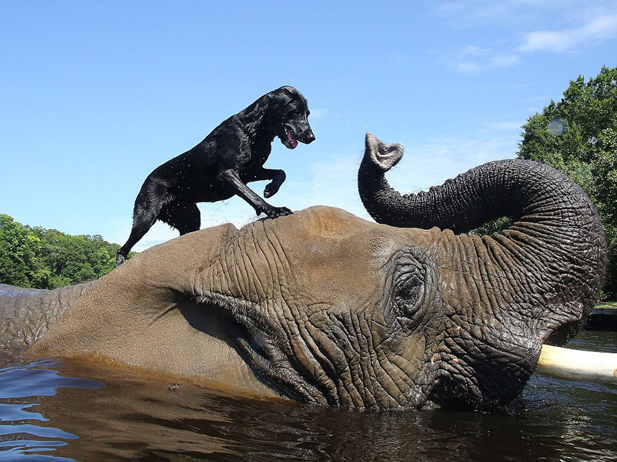 elephant-dog-friendship-bubbles-and-bella-15
