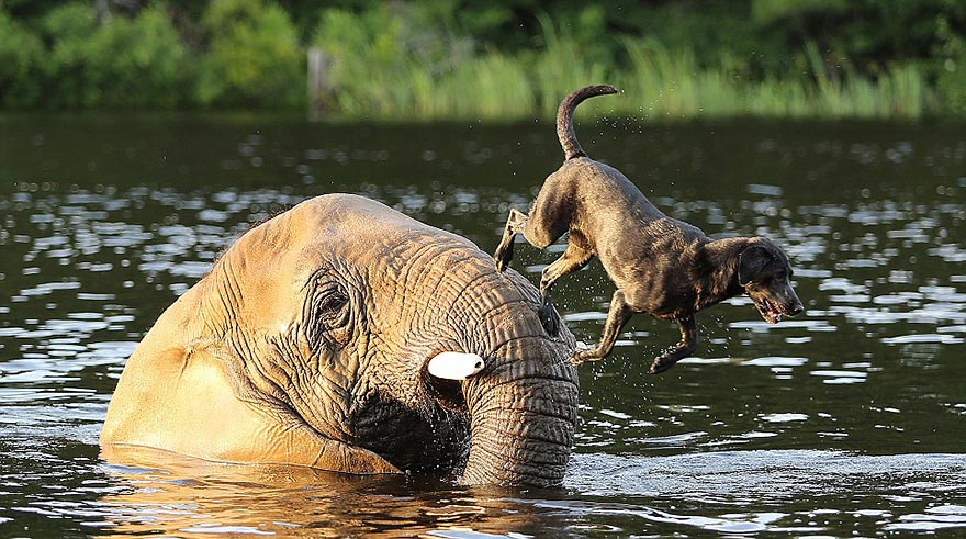 elephant-dog-friendship-bubbles-and-bella-35