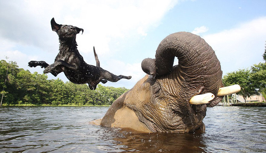 elephant-dog-friendship-bubbles-and-bella-45