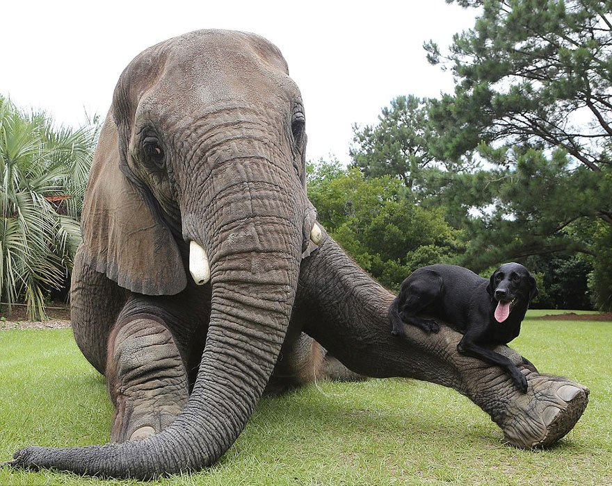 elephant-dog-friendship-bubbles-and-bella-65