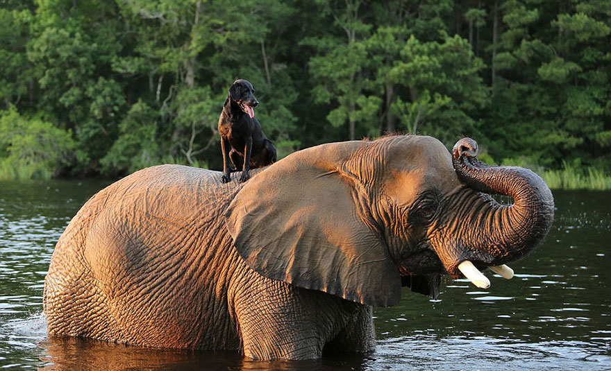elephant-dog-friendship-bubbles-and-bella-75